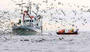 Fishing boat surrounded by birds